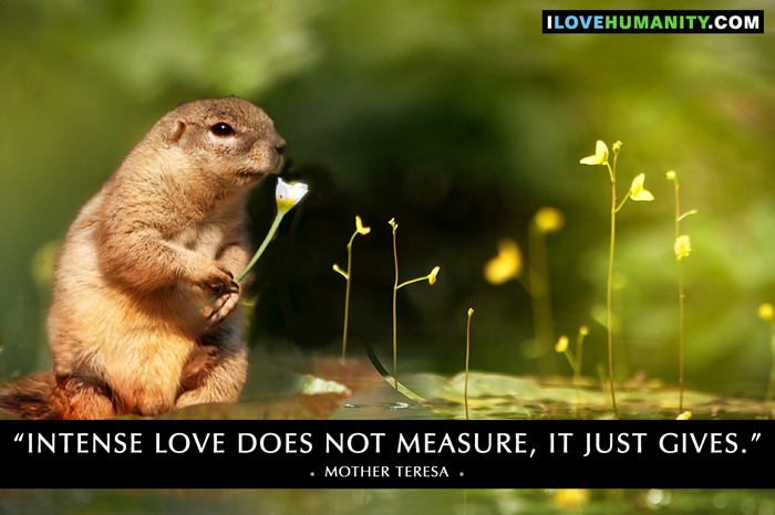 Intense love does not measure, it just gives. — Mother Teresa, I Love Humanity