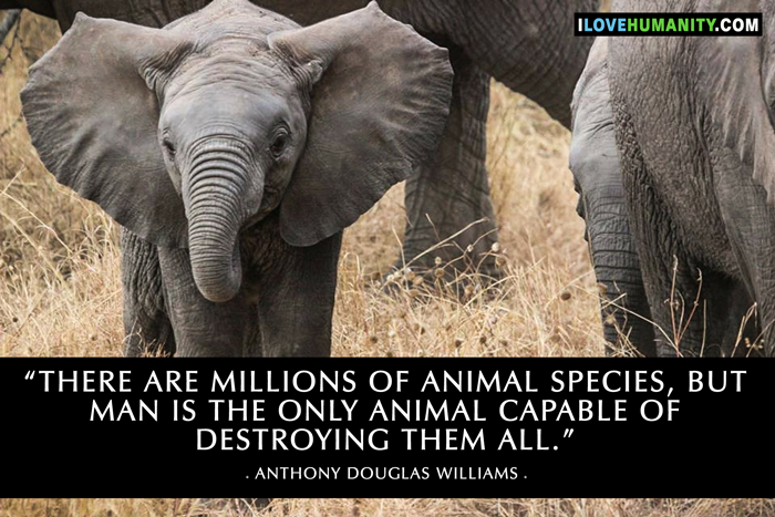 There are millions of animal species, but man is the only animal capable of destroying them all. ― Anthony Douglas Williams